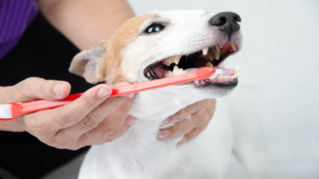 dog dental hygiene tips from pet microchipping facts from full circle veterinary care in lake oswego oregon